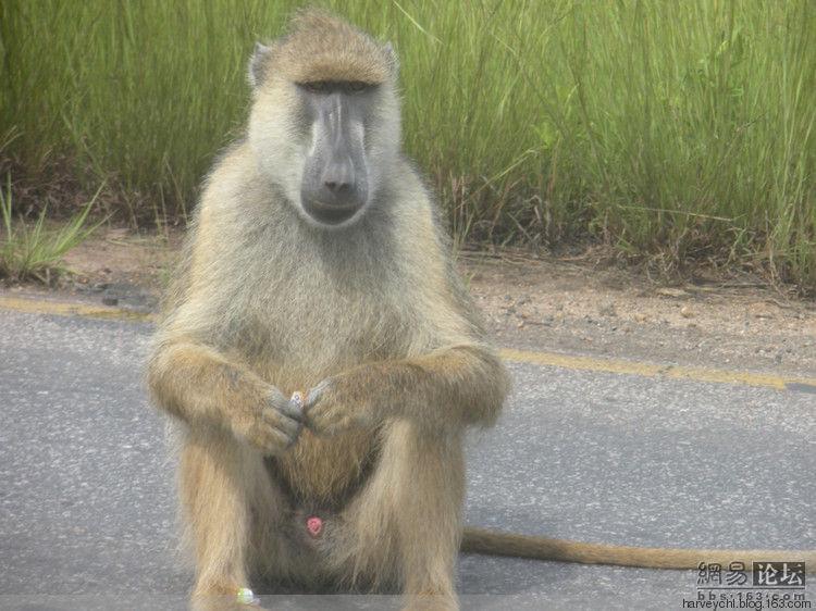 坦桑尼亚野生动物的故事