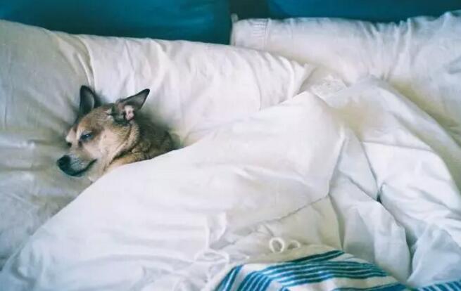 <b>门事件  睡觉,一个让你延长生命的革命性的新秘方</b>