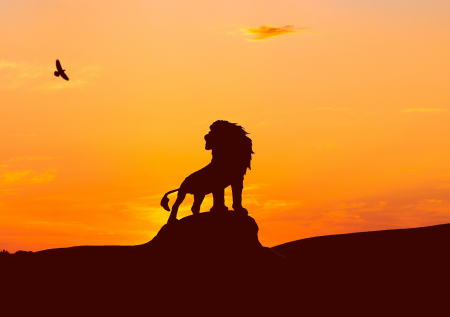 <b>小狮子巴卡的故事</b>