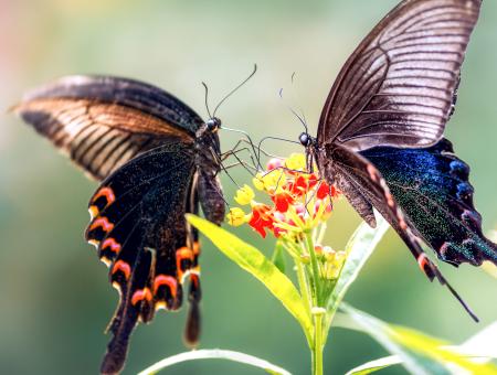 <b>一只蝴蝶的感恩故事</b>