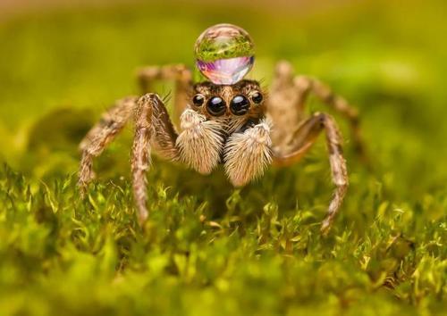 蜘蛛和暴风的故事